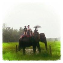 Elephant Jungle Safari ~ Nepal